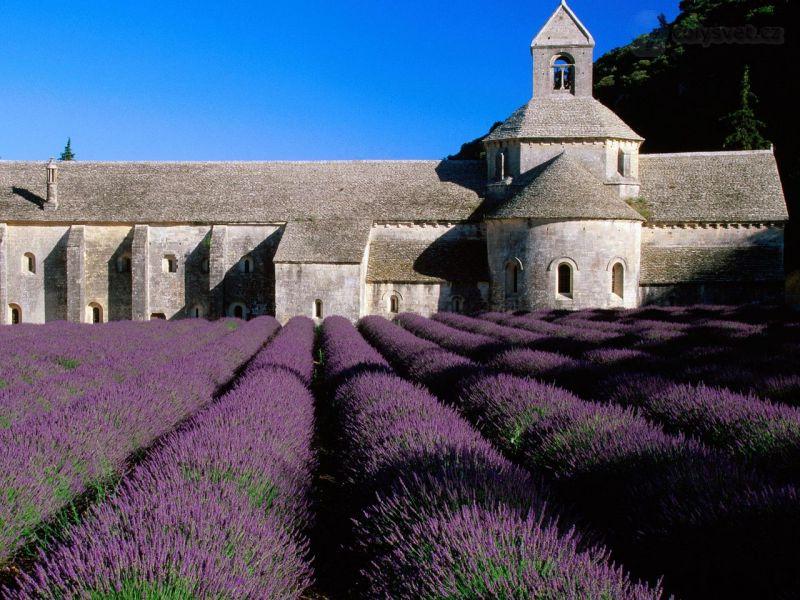 lavender-field-abbey-of-senanque-near-gordes-provence-france-1